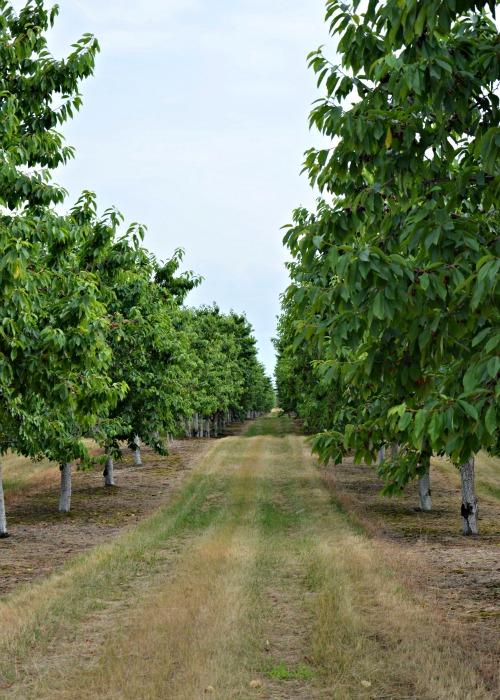 Mission Fruit Company Traverse City, Michigan www.mountainmamacooks.com