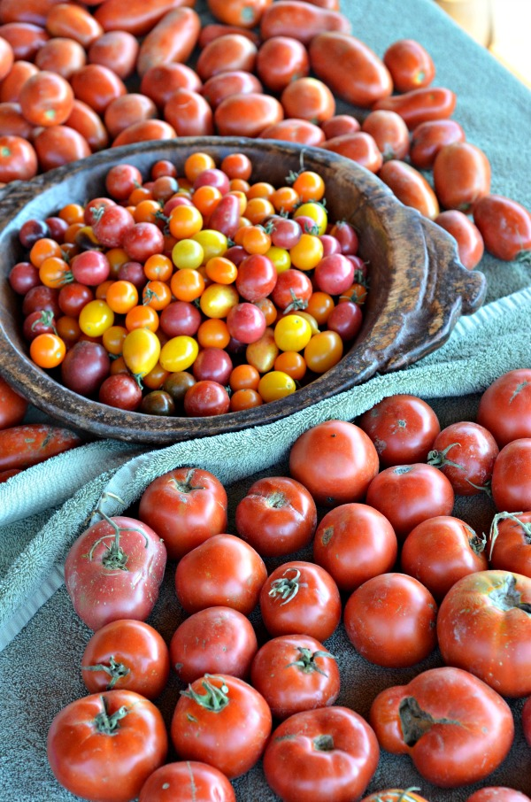 Heirloom Tomato Sauce   mountainmamacooks.com #canningweek14